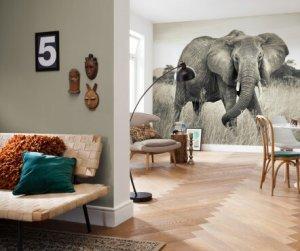 Fotobehang met olifant