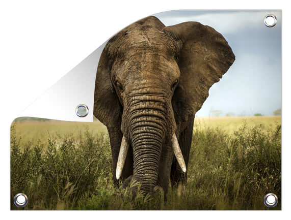 Tuinposter met olifant